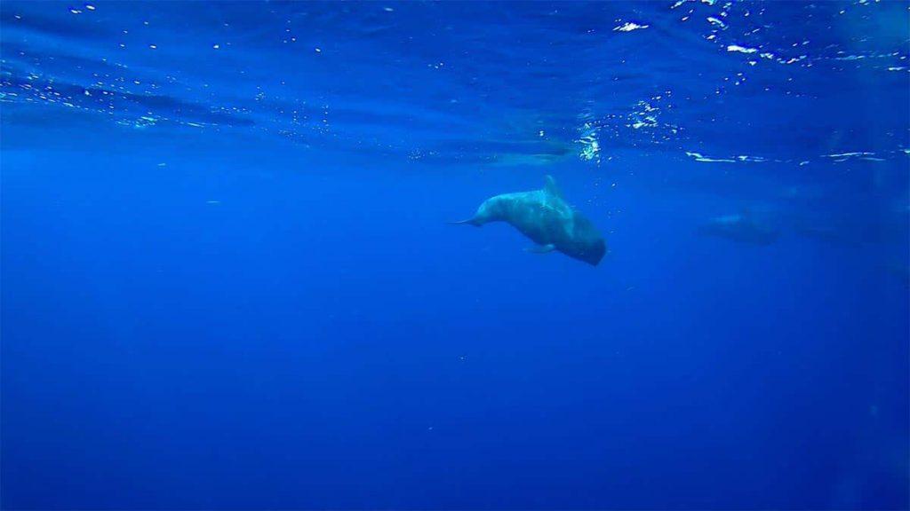 Teneryfa rejs na obserwację delfinów i wielorybów blog podróżniczy