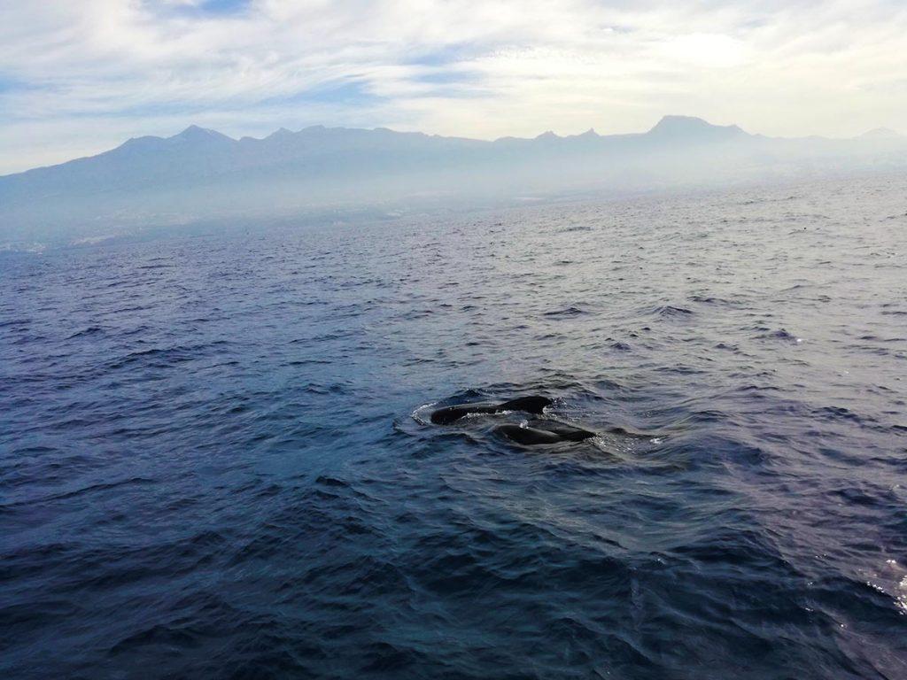 Teneryfa blog o podróżach wieloryby piloty kilka kilometrów od wyspy