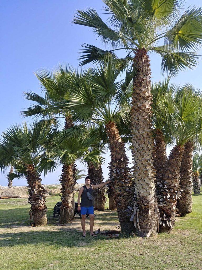 sycylia palmy hotel gdzie sie zatrzymac wakacje na sycylii