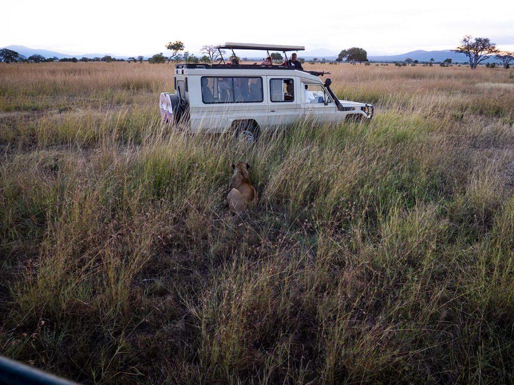 jak zorganizowac safari z zanzibaru zanzibar wakacje