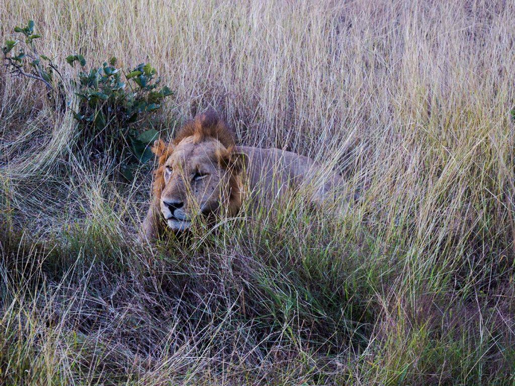 safari zanzibar jak zorganizowac zanzibar wakacje