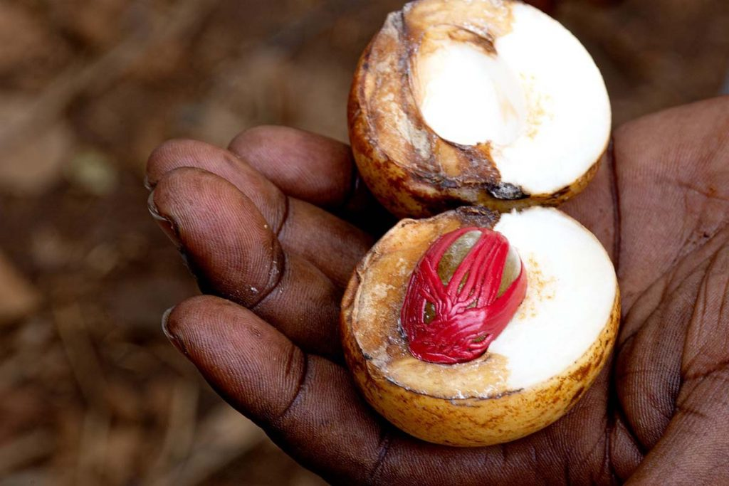 Zanzibar farma przypraw plantacja przypraw na Zanzibarze