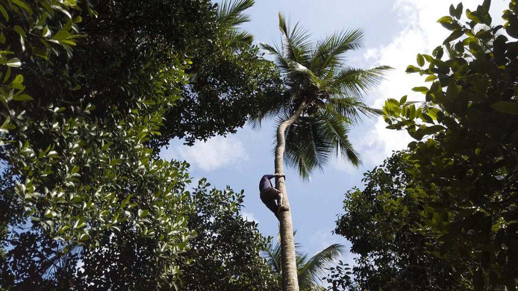 zanzibar farma przypraw plantacja kokosy Zanzibar plantacja przypraw