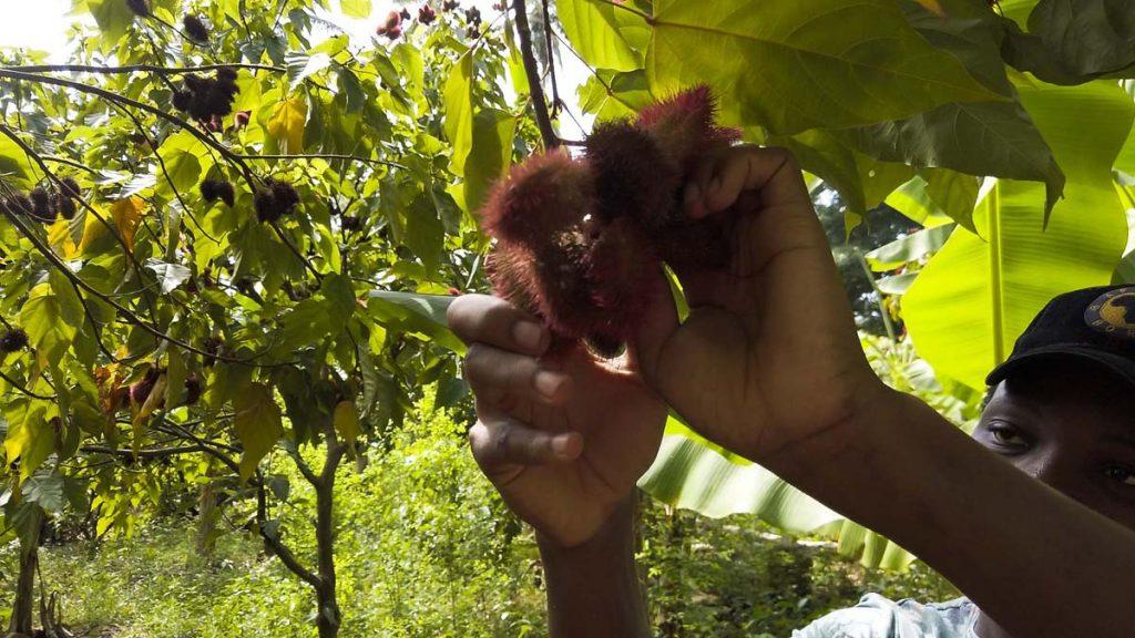 Którą plantację przypraw na Zanzibarze wybrać?