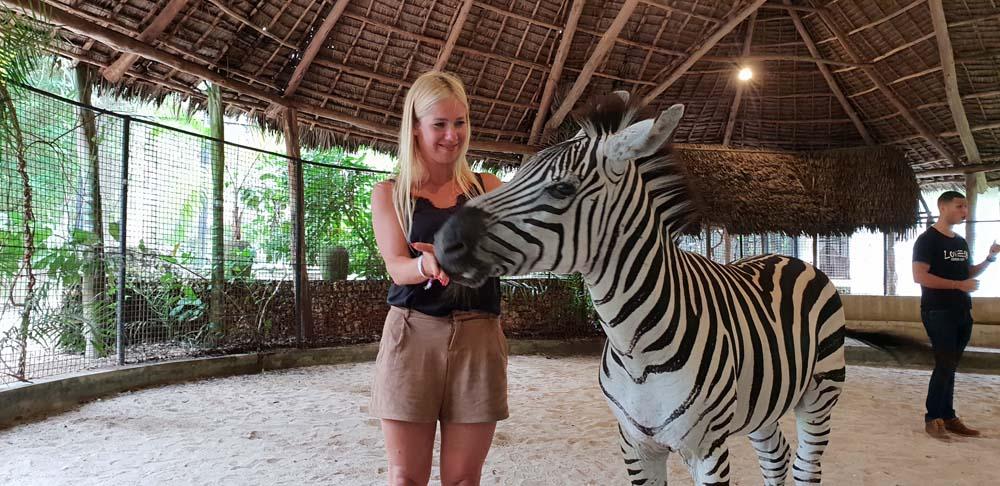 Cheetahs Rock atrakcje zanzibaru zwierzeta 1 Zanzibar atrakcje