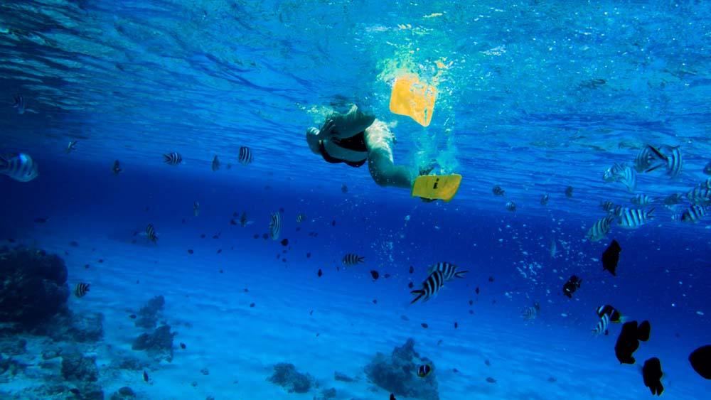 co zobaczyc na zanzibarze blue safari Zanzibar atrakcje