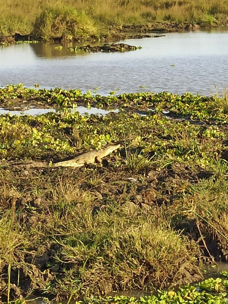 safari afryka tanzania krokodyl Zanzibar atrakcje