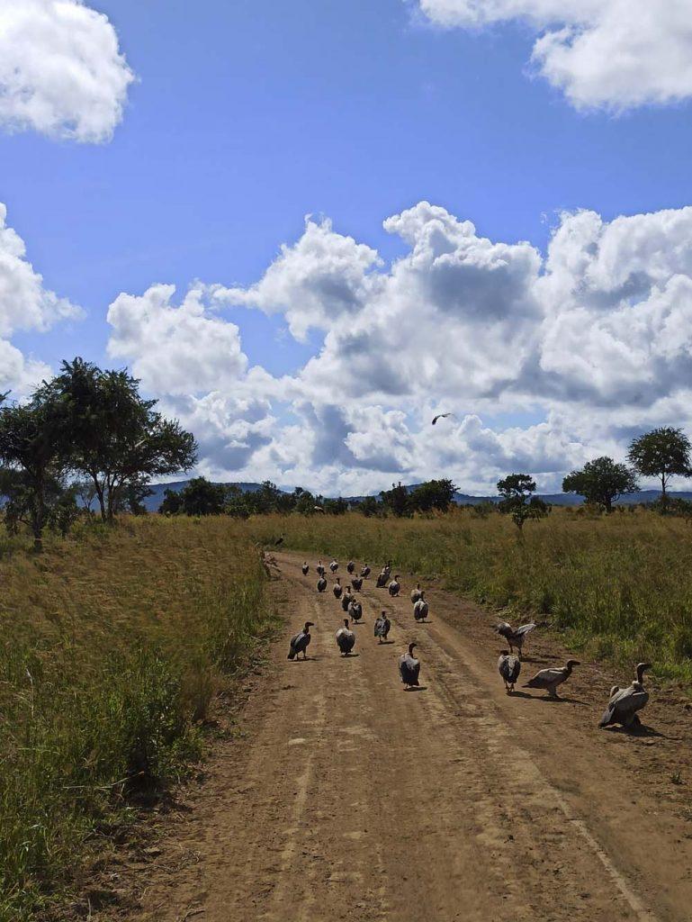safari atrakcje zanzibar sepy Zanzibar atrakcje