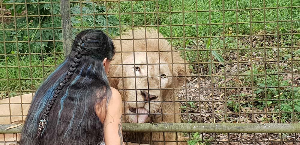 zanzibar co zobaczyc cheetahs rock lew 1 Zanzibar atrakcje