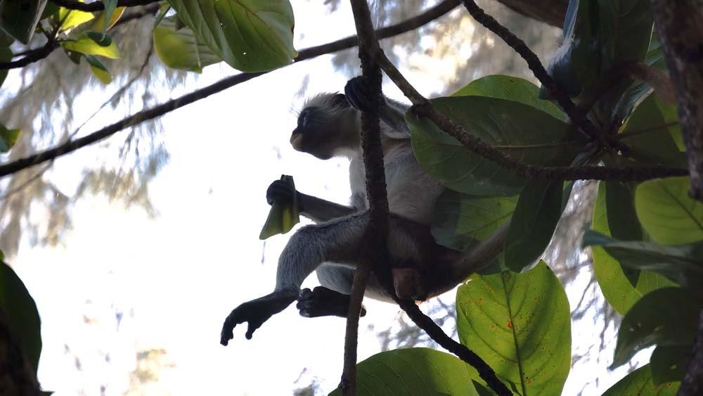 zanzibar jozani forest atrakcje turystyczne Zanzibar atrakcje