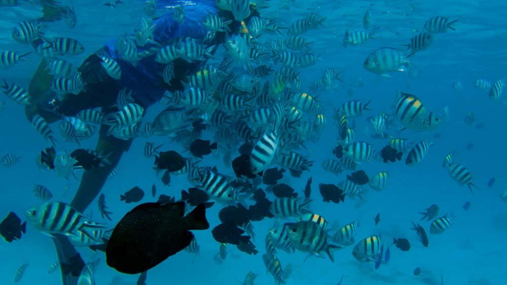 Zanzibar co warto zobaczyć - wycieczka wodna na wyspę Mnemba na rafę koralową i piękne ławice ryb