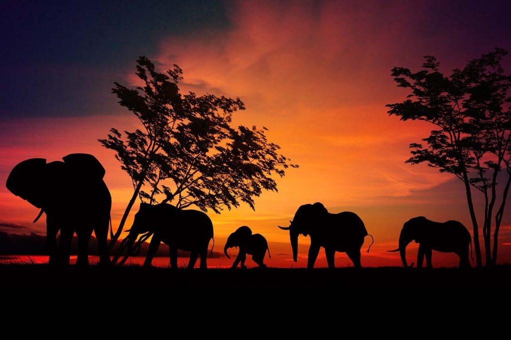 Jak zorganizować safari w Tanzanii w Afryce