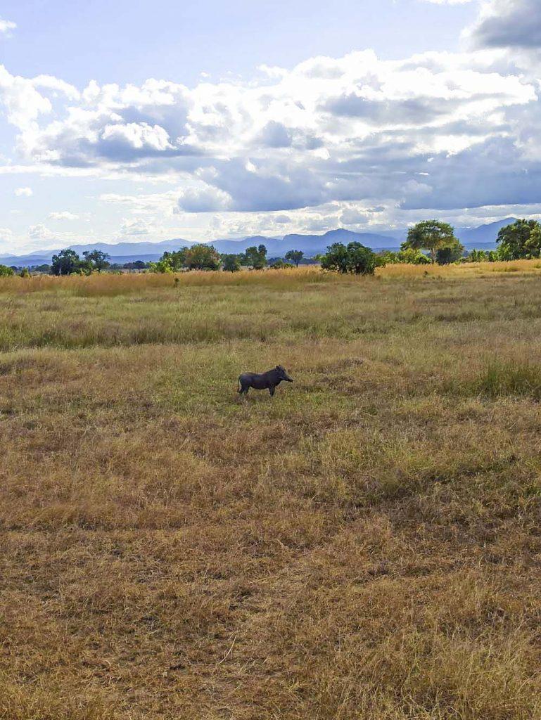 organizacja safari tanzania afryka safari w Tanzanii