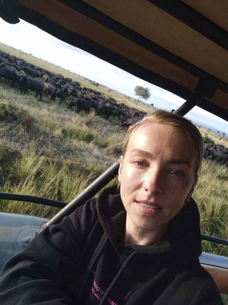 Safari w Tanzanii stado bawołów