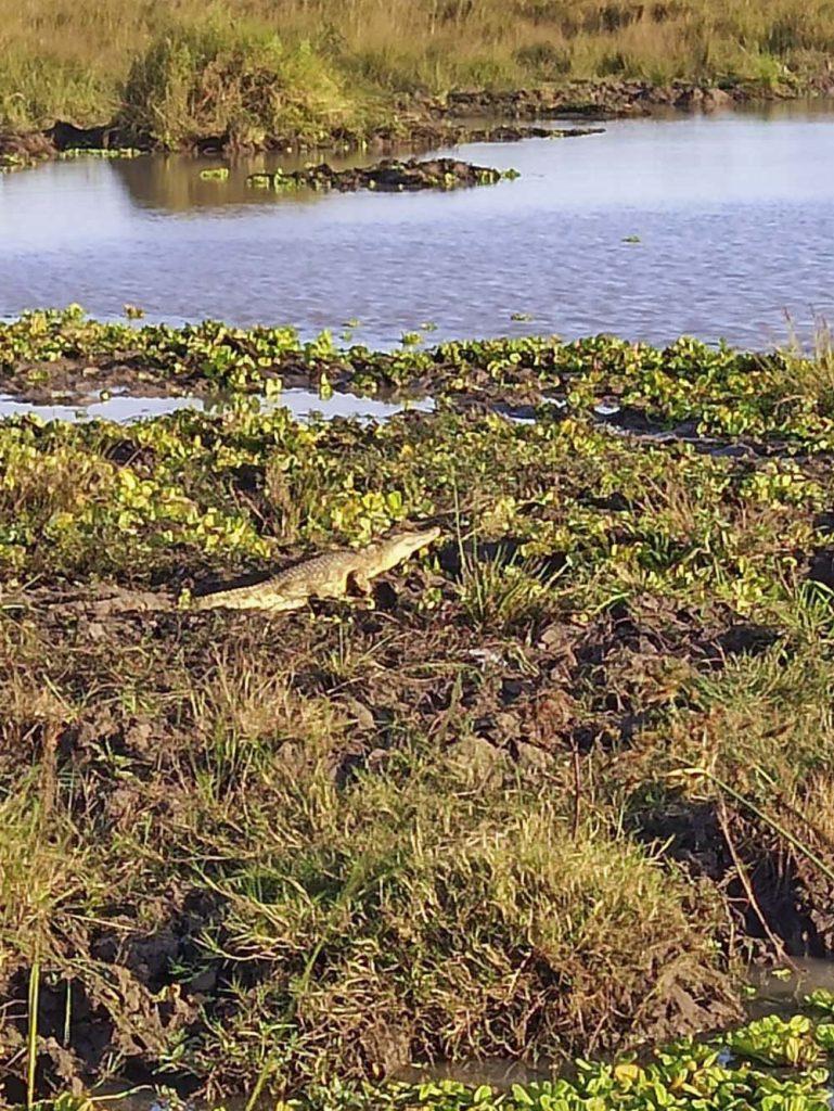 tanzania safari krokodyle dzikie afrykanskie zwierzeta safari w Tanzanii
